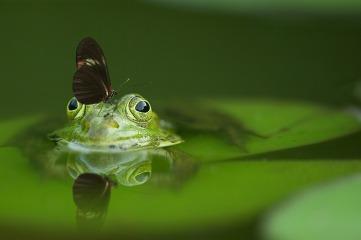 frog-540812_1280.jpg